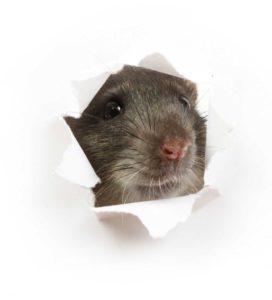Unitechnics Kanal Rattenköderbox